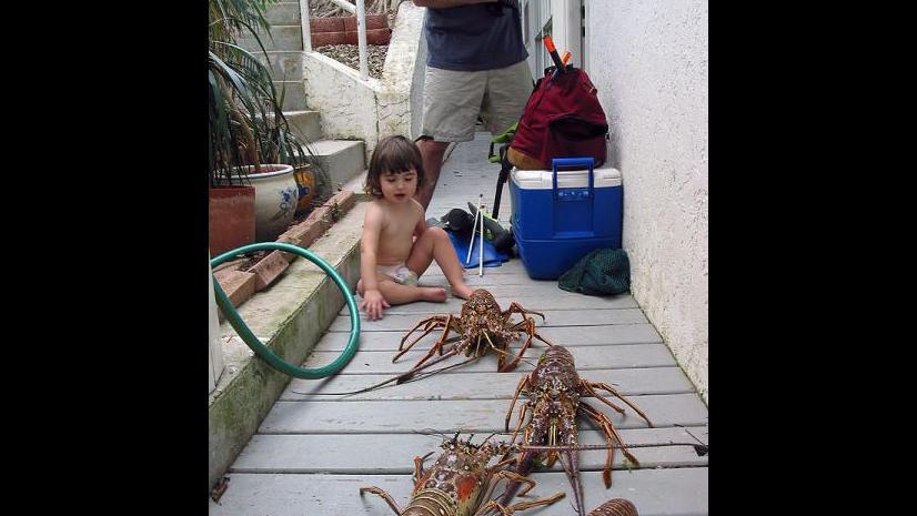 Lobsters in the virgin islands