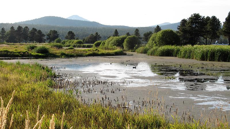 River Deschutes Ducks.