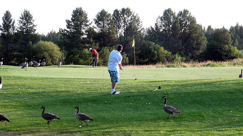 Goose Golf in Sunriver, Oregon