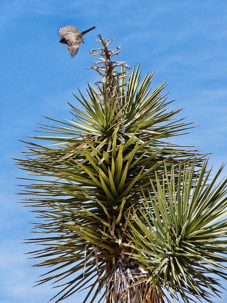 Bird on palm.