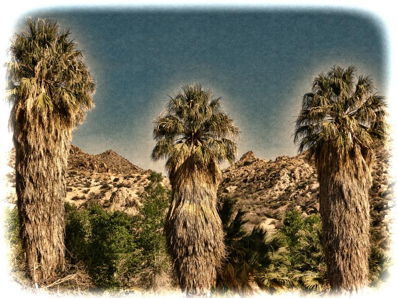 """Three Palms"" at Cottonwood Springs."