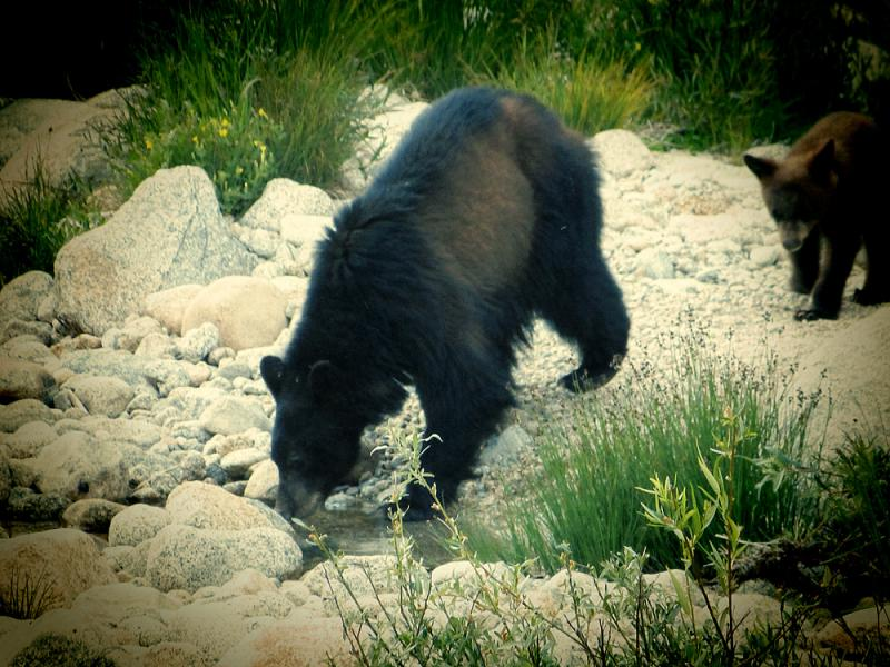 We were amazed to see bears so early in our trip.