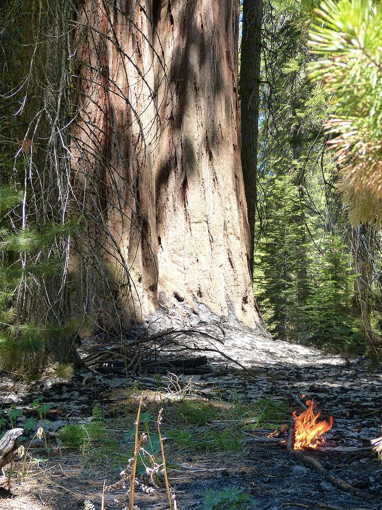 Unattended control burnings amongst the sequoia.