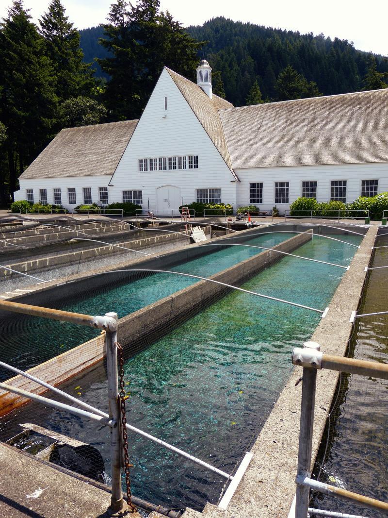 The fish hatchery at Cascade Locks