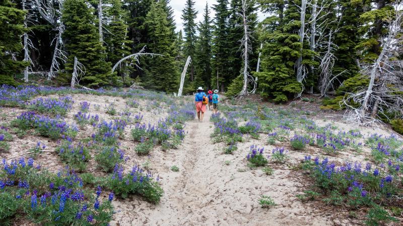 Hiking up at Cloud Cap on Mt. Hood