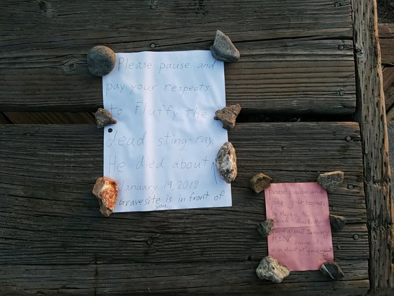 Message re: dead sea critters