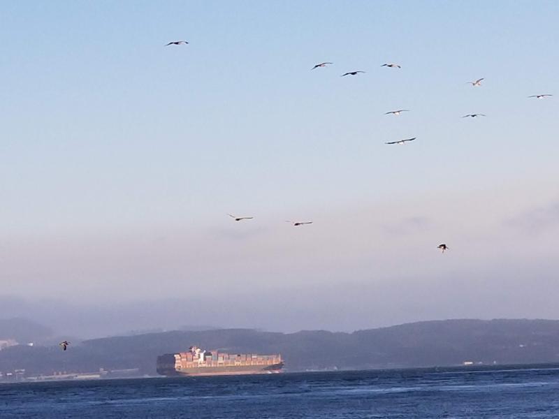 SF Bay from Tiburon