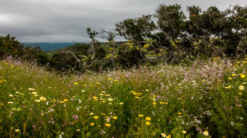Wildflowers up above Richmond Point
