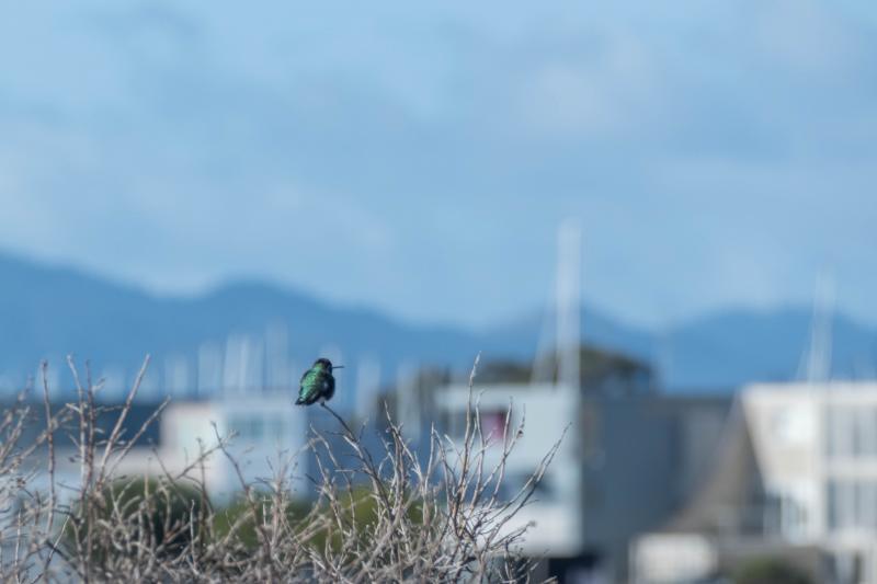 Hummingbird takes a rare rest.