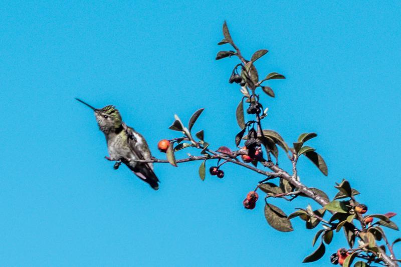 Little Bird, Alameda Point
