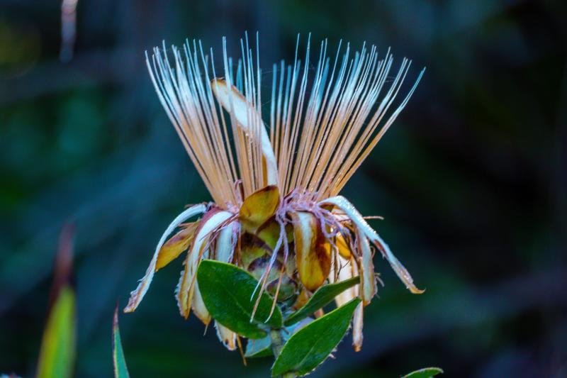 Botanical Gardens at Golden Gate Park